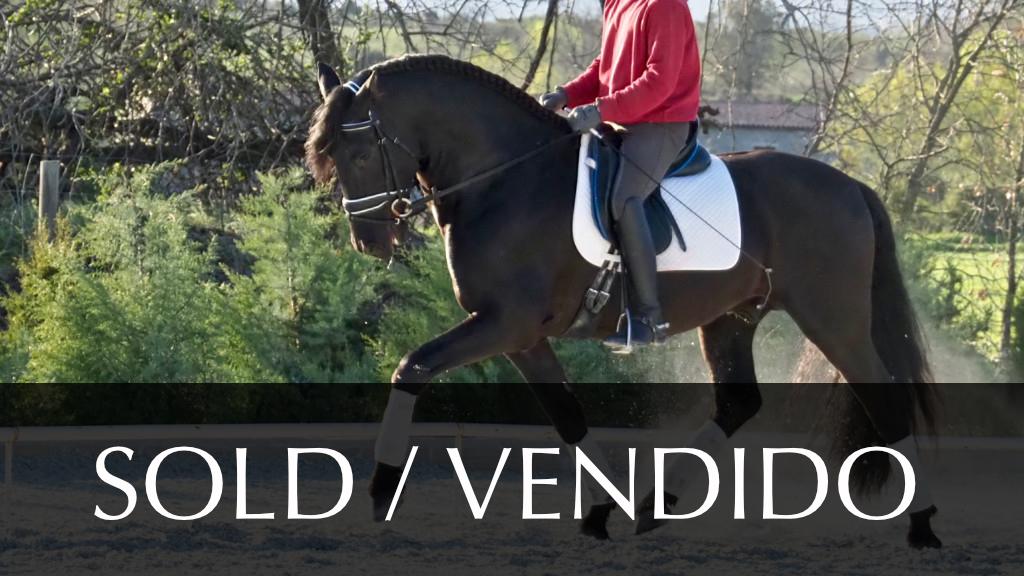 Schwarzes Pferd PRE Spezielle Morphologic. Cod 6322
