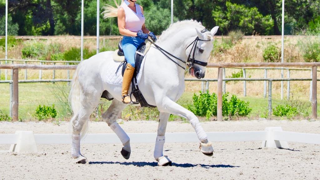 lusitano horse gran premio level for sale