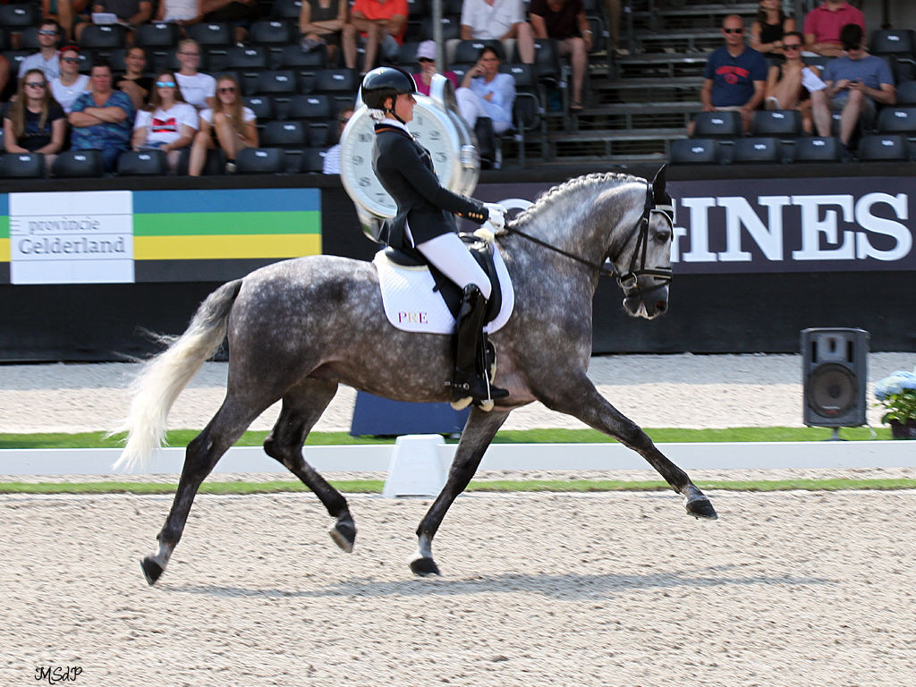 molinero fs top dressage spanish horse