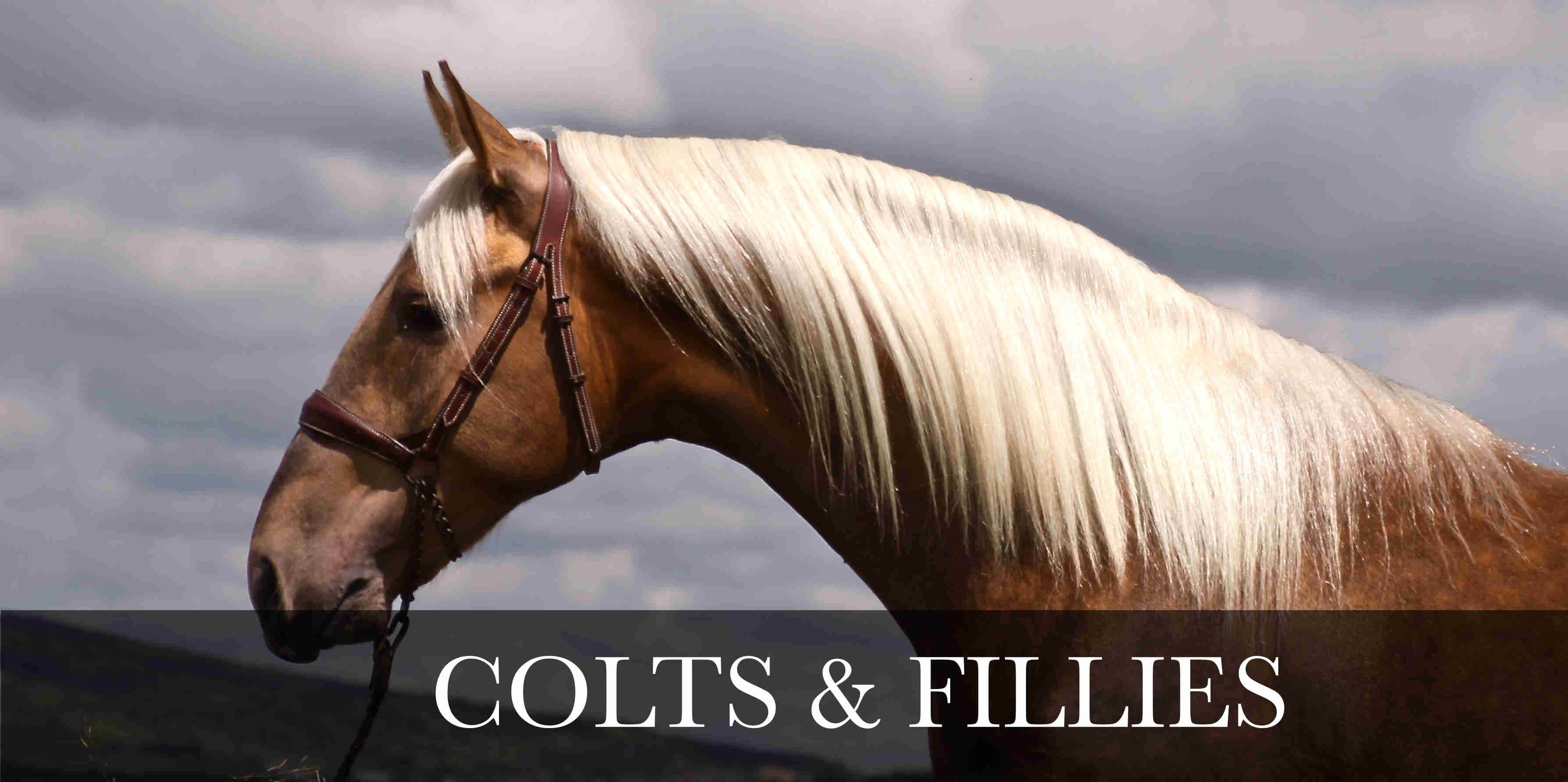 COLTS AND FILLIES PRE AND PSL FOR SALE