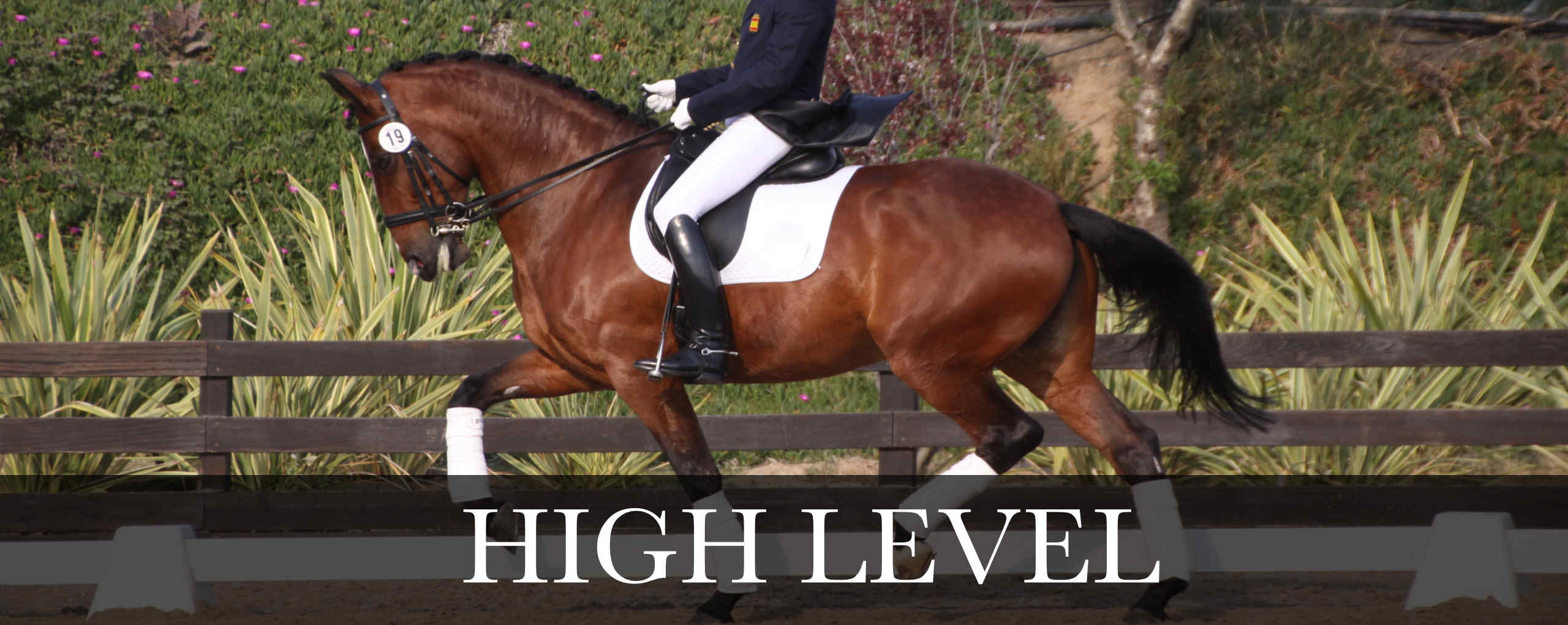 high level dressage pre and psl horses