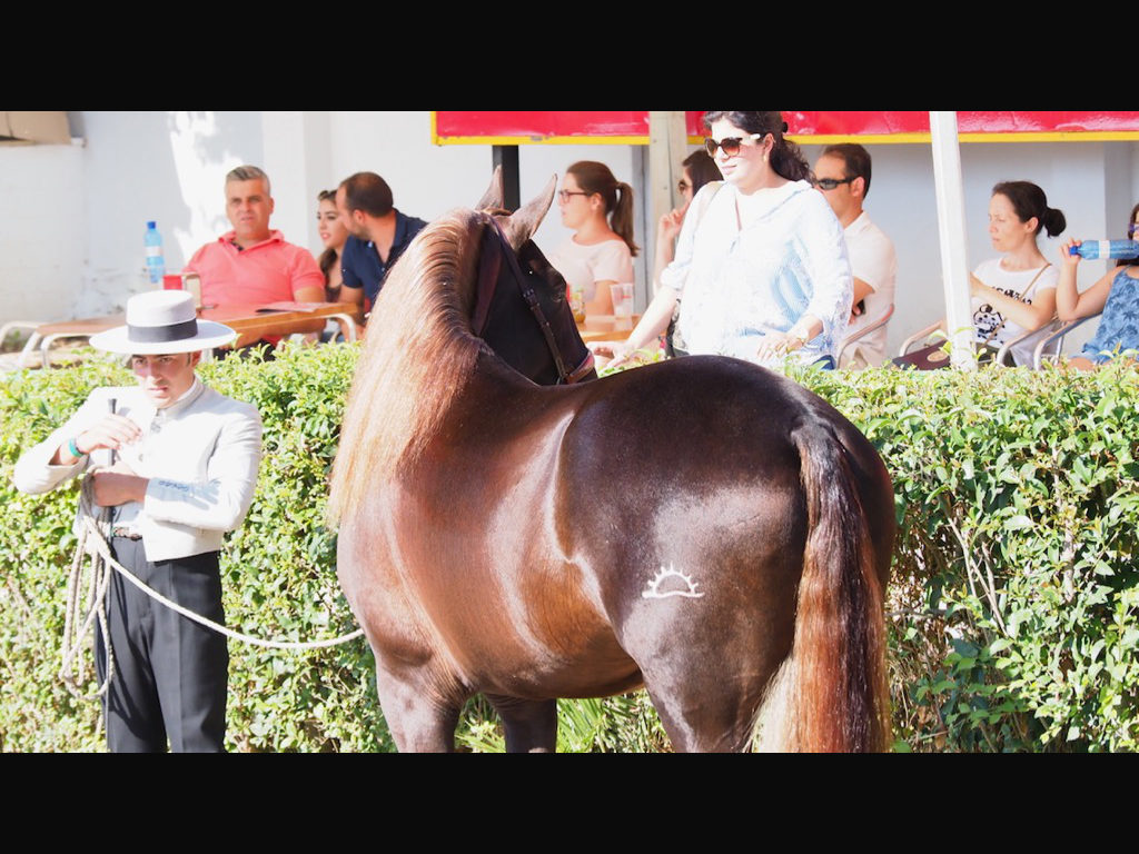 MORPHOLOGY PRE SHOW – ZAFRA 2018. Pictures of some horses