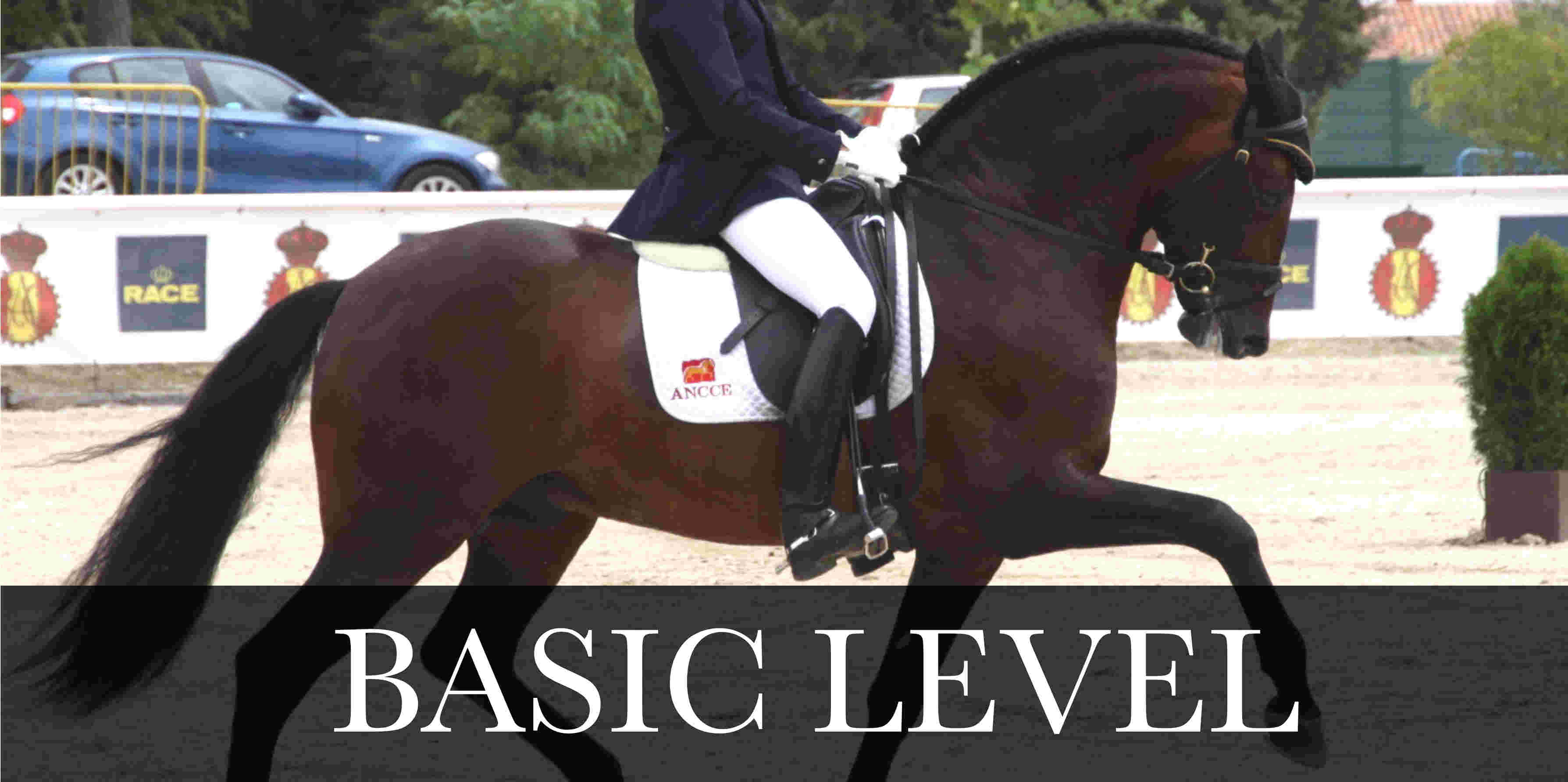 pre ridden basic level dressage