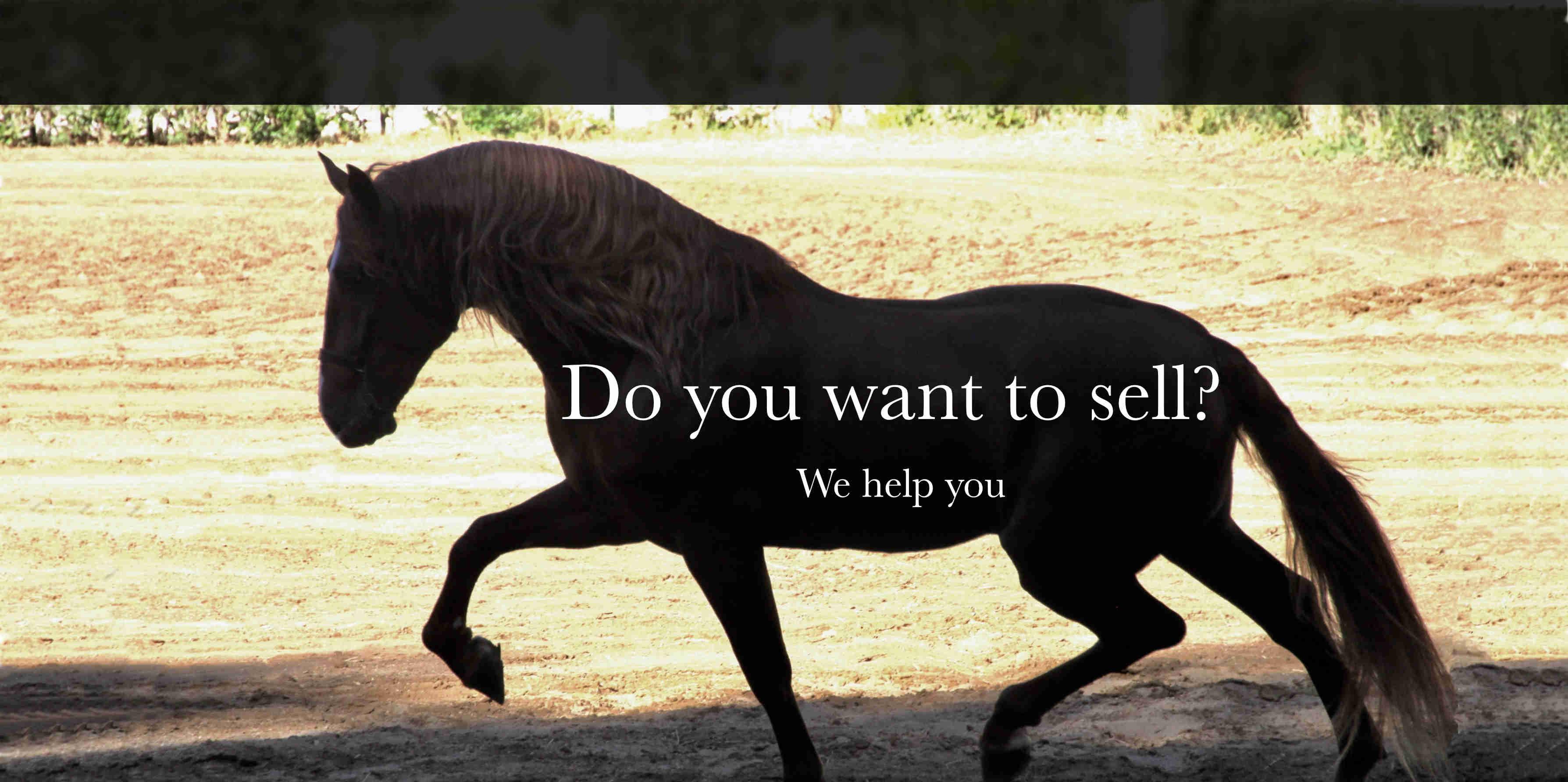 PRE PSL HORSES FOR SALE