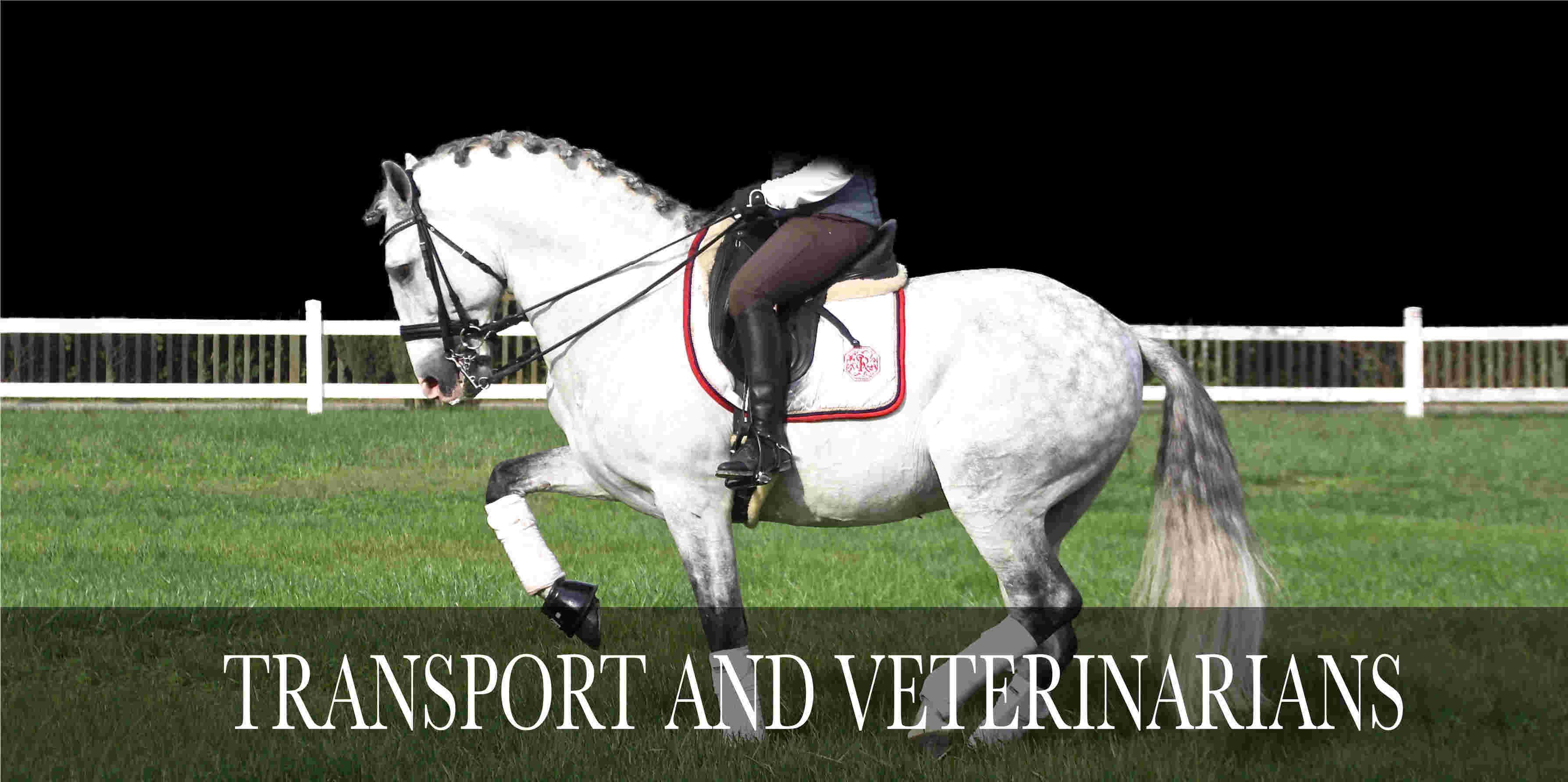 transport horses veterinairans