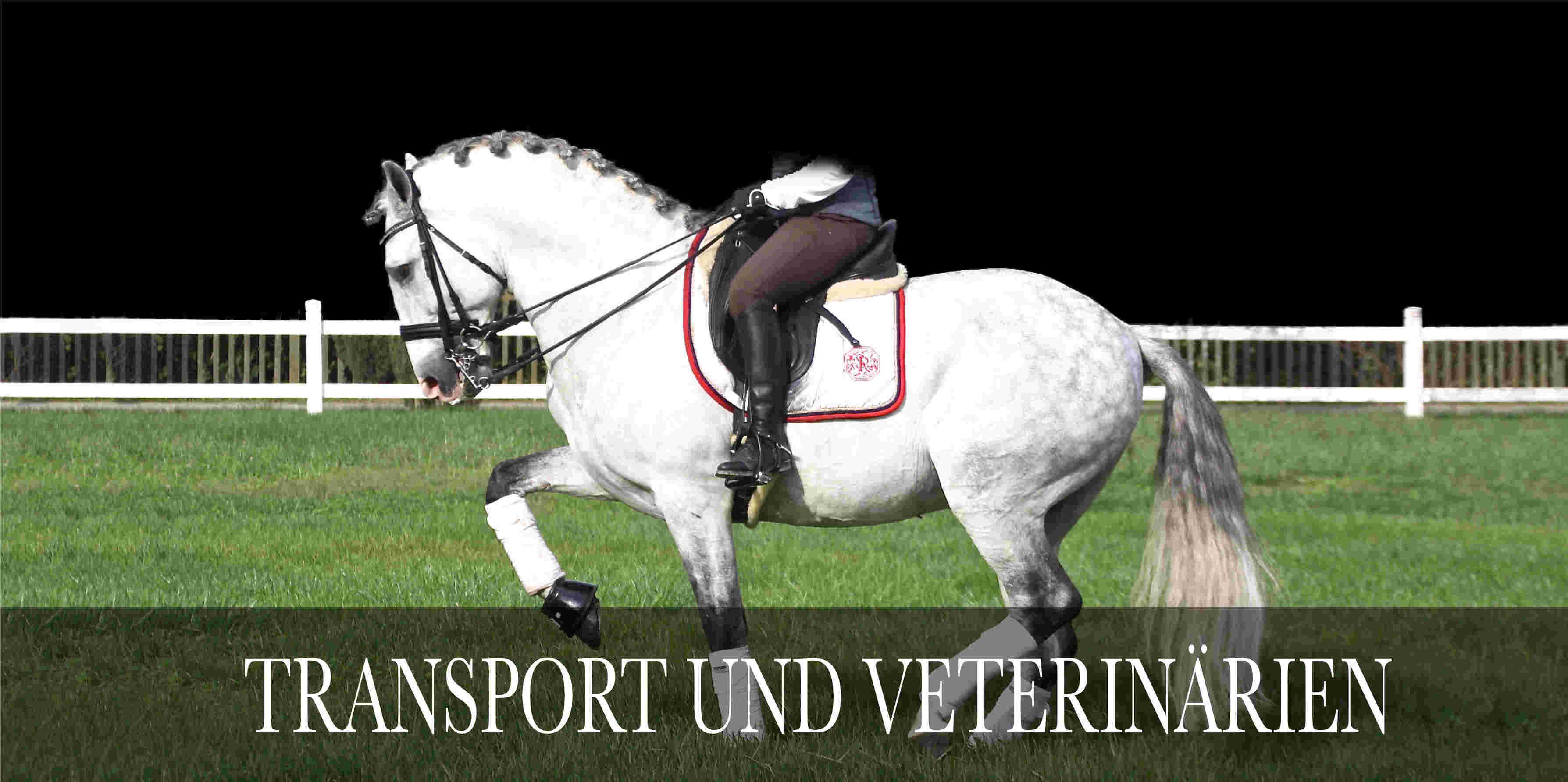 transport Pferde und veterinarien