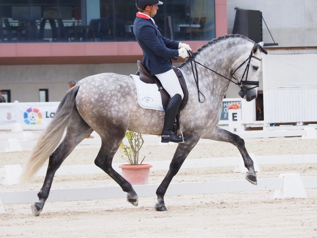 Dressage Young Horses Championship of Spain 2018 – Cecyl