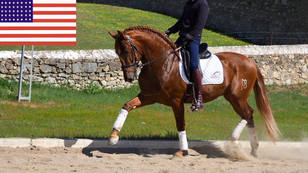 Beauty Chestnut Andalusian Horse piro free. Cod 7876