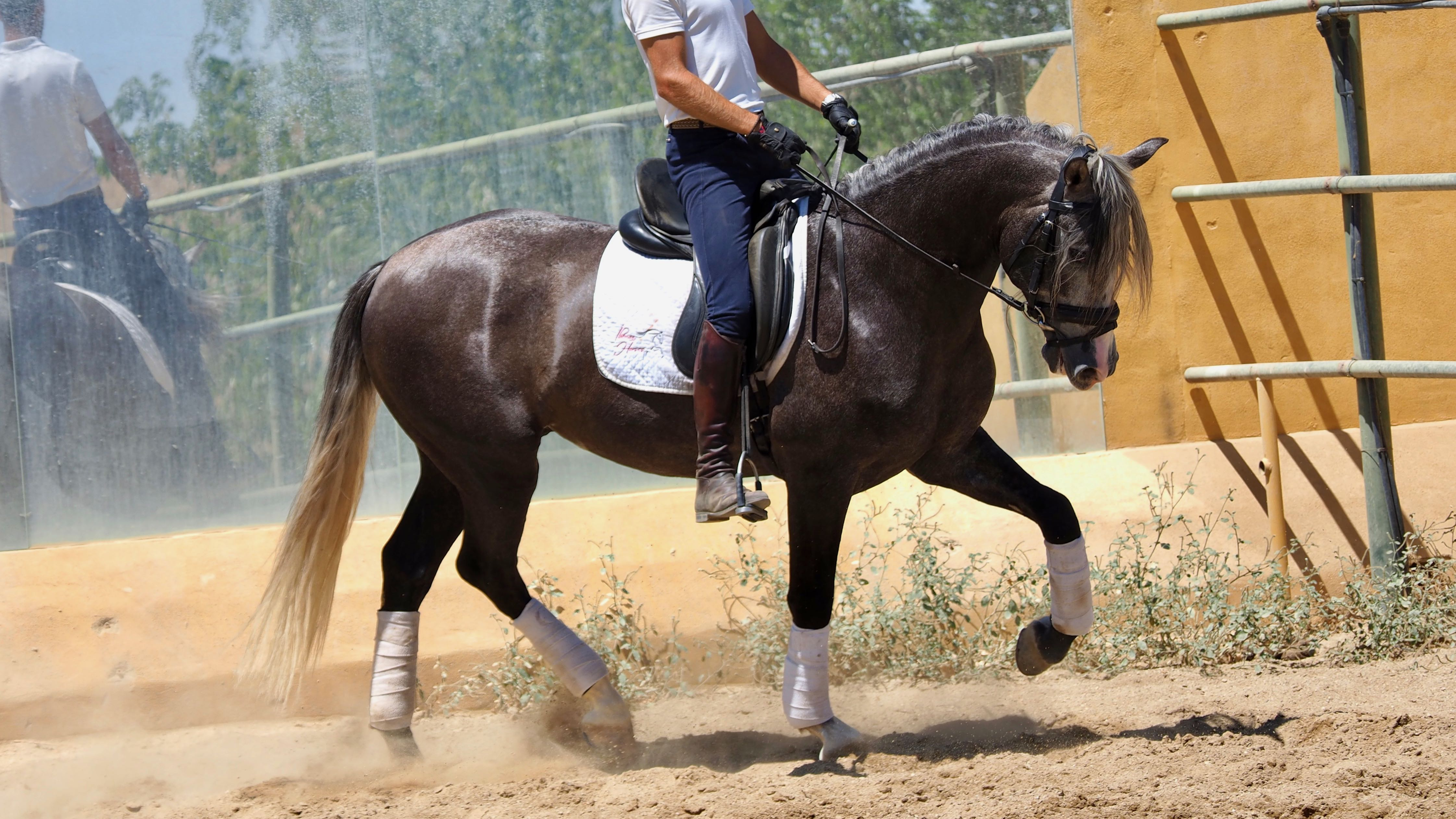 Beautiful Andalusian horse very noble. Cod. 9371