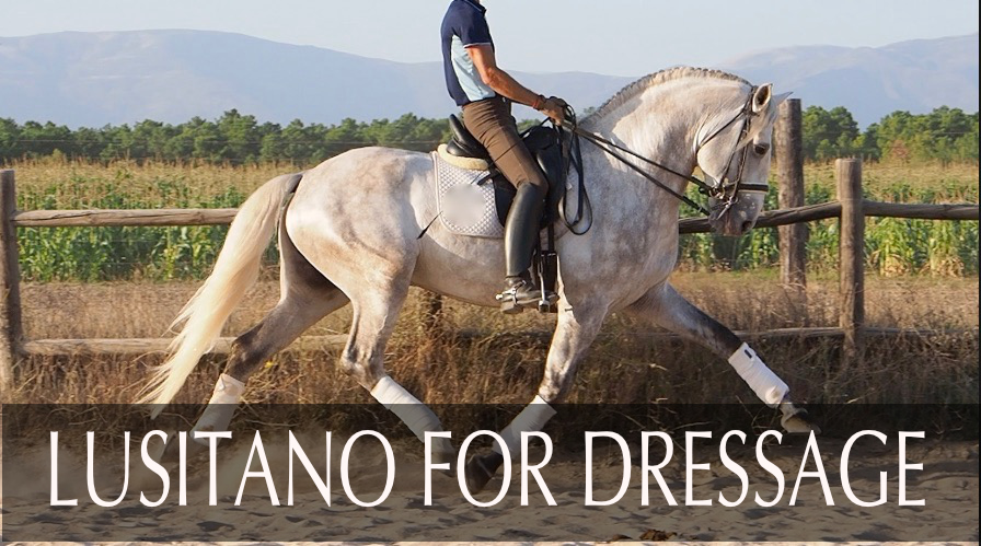 Lusitano Dressage Horse for sale. Cod. 13780