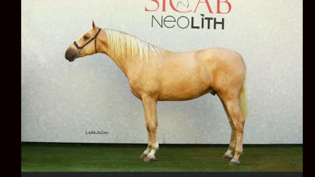 Beautiful Palomino horse prospect for dressage. Cod 15690