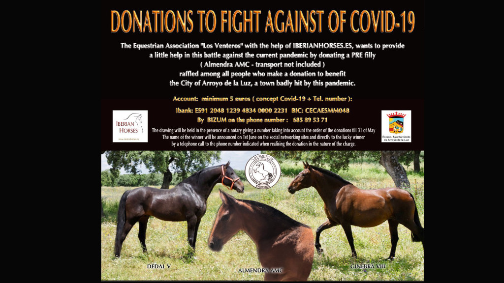 Get a PRE filly with a small donation for Covid 19
