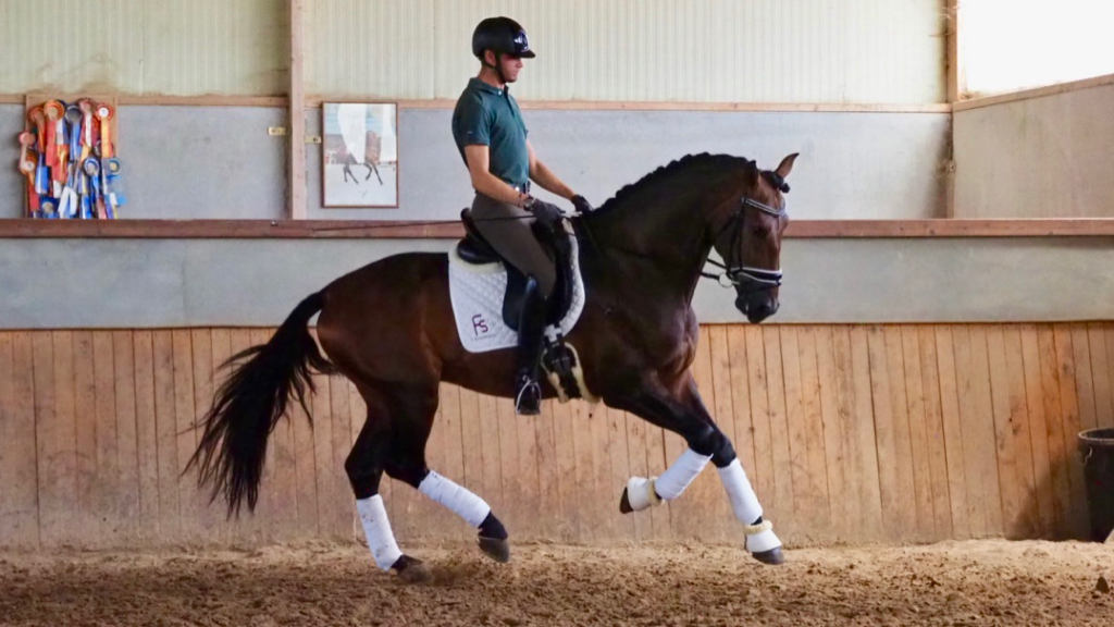 Special Andalusian horse for dressage good movements