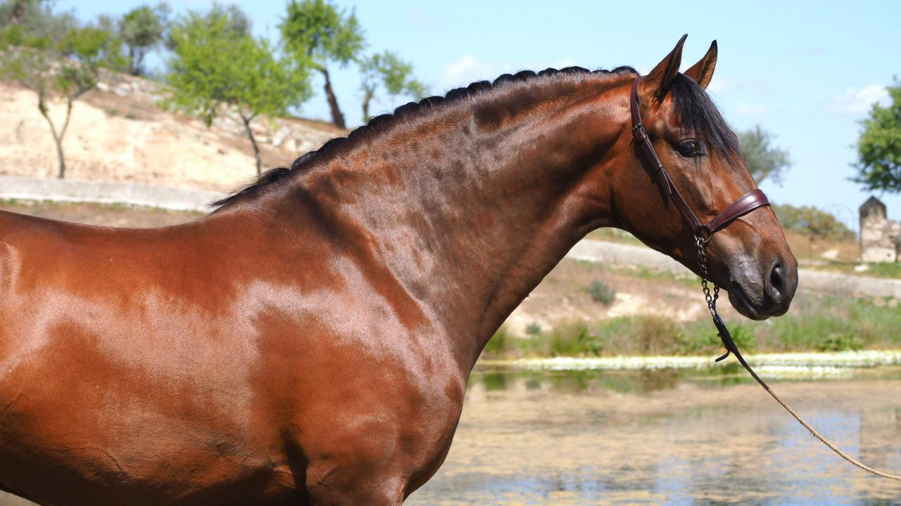 Spezial PRE Pferd mit Fantastic Origins frei von Pyro. Code 18589