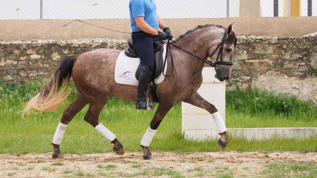yeguada seahorse
