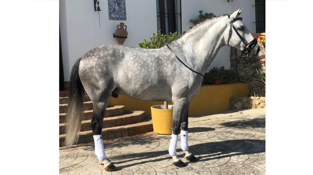 Expressive CDE Horse PSG level. Cod 19518