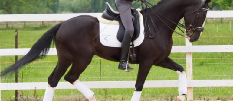 Buscamos caballos CDE y de Deporte.