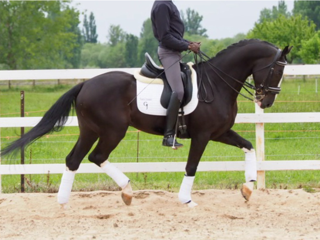 We are looking for CDE and Sport horses.