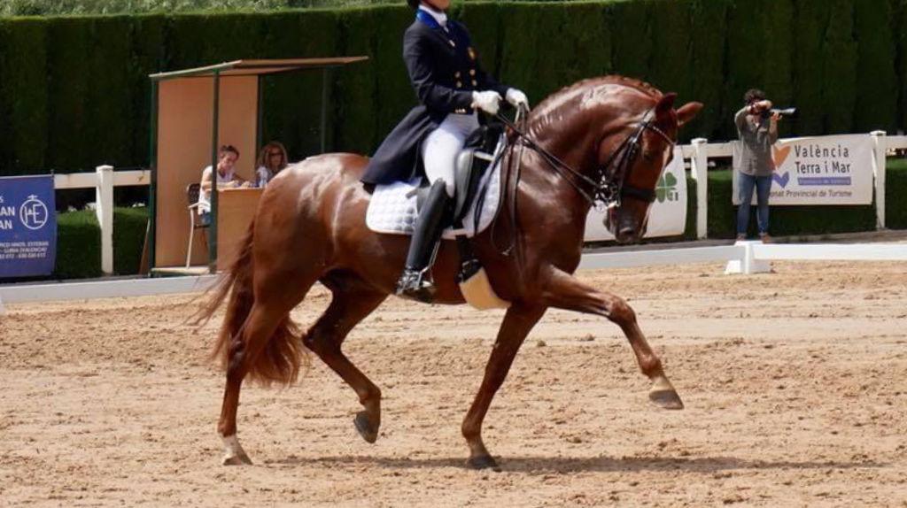 Espectacular caballo PRE en nivel Gran Premio libre de piro. Cod. 21038
