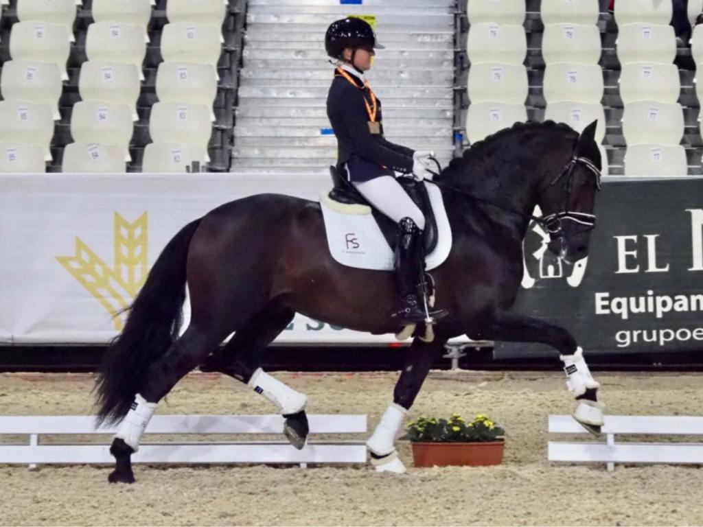 Spanish horse en the world championship